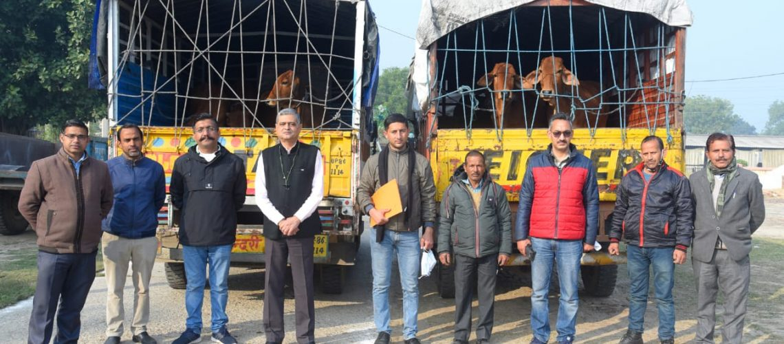 12-sahiwal-heifers-consigned-to-csk-hp-agricultural-university-palampur