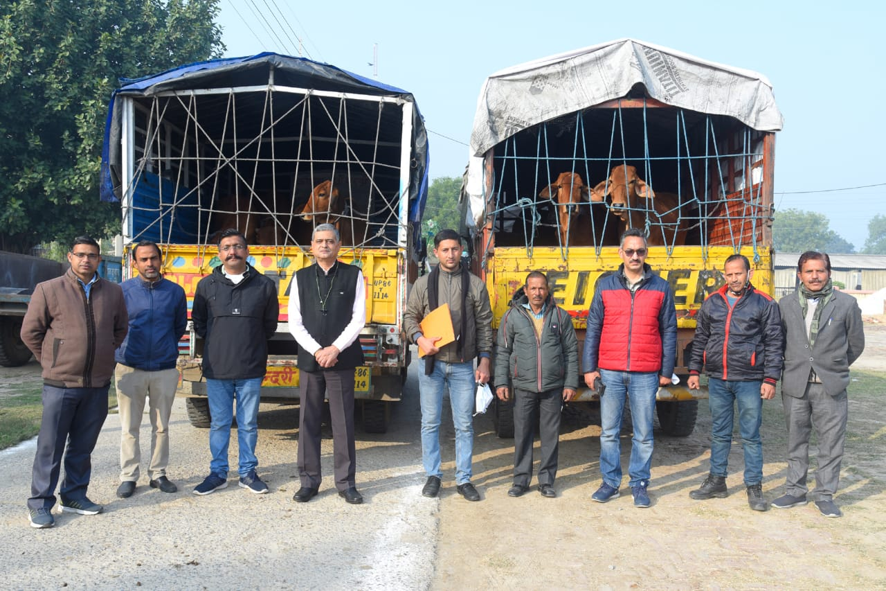 12 Sahiwal heifers consigned to CSK HP Agricultural University , Palampur