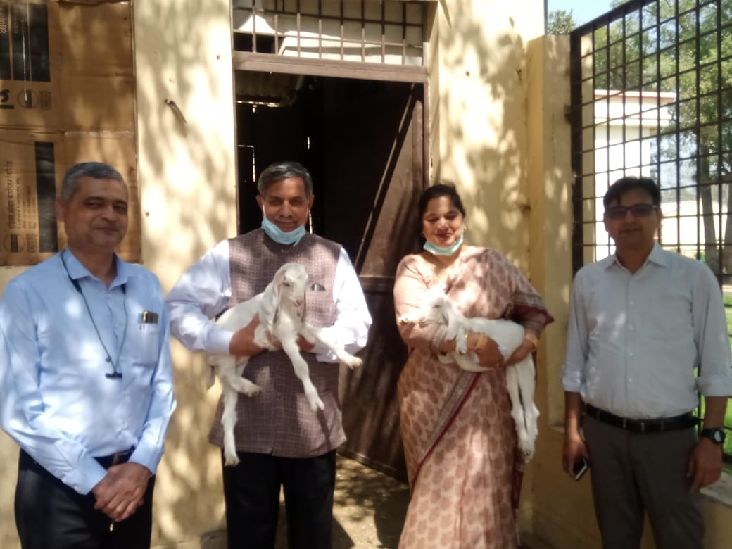Chairman, University Grant Commission Prof D. P. Singh visited DUVASU, Mathura on 7th March 2021 and appreciated the activities of the Goat Unit of the College