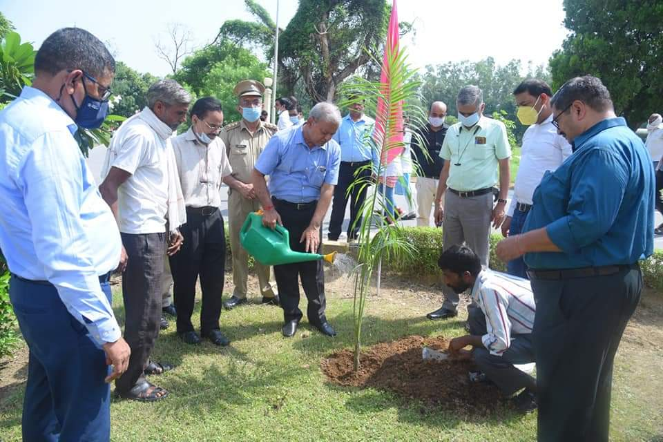 lets-plant-a-tree-save-the-planet